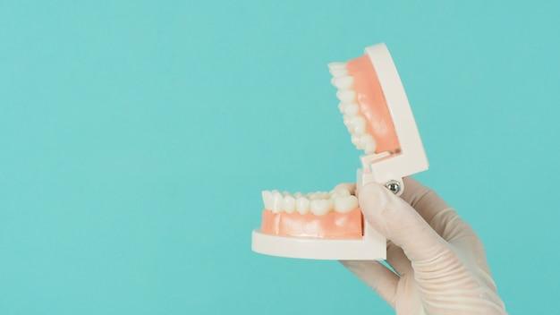 Modèle orthodontique de dents en main qui porte un gant médical sur fond vert menthe ou bleu tiffany.