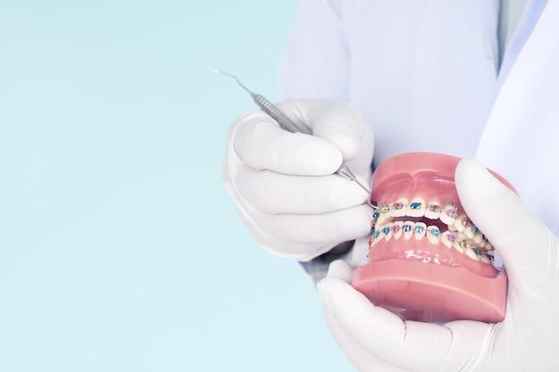 Modèle orthodontique et outil de dentiste - modèle de dents de démonstration des variétés d'orthodontie