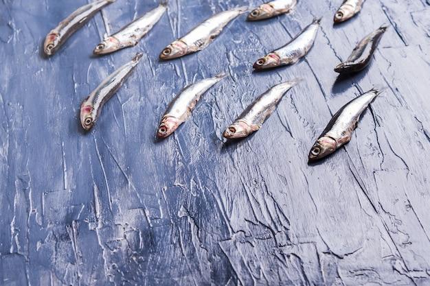 Modèle de poisson. anchois frais sur bleu