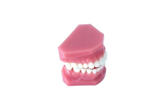 Modèle de prothèse dentaire isolé sur fond blanc avec un tracé de détourage