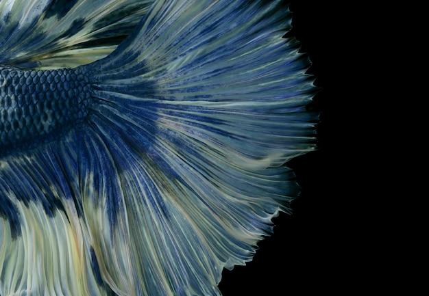 Modèle de queue de poisson betta dans un style art sur fond noir