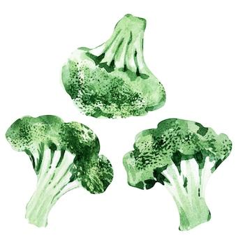 Modèle sans couture aquarelle avec différents types de chou. brocoli