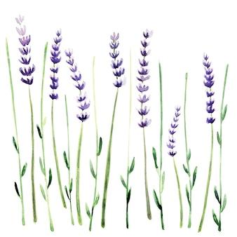 Modèle sans couture aquarelle avec des plantes de lavande