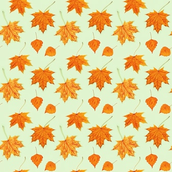 Modèle sans couture de belles feuilles d'automne d'érable et de bouleau