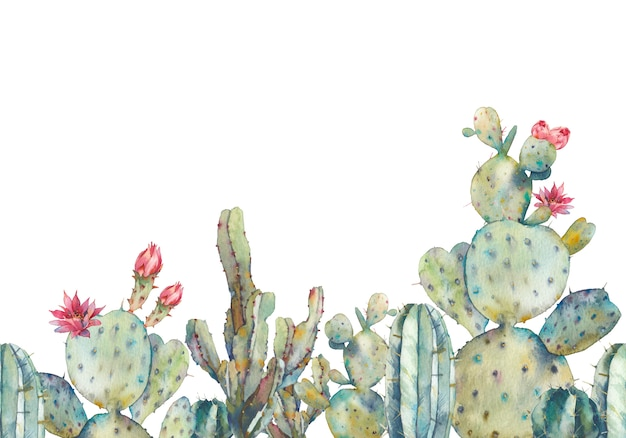Modèle sans couture de cactus aquarelle. ornement répétitif dessiné à la main avec des plantes du désert sur fond blanc. conception de bannière de cactus à fleurs