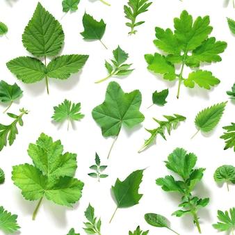 Modèle sans couture de diverses feuilles vertes naturelles sur fond blanc, comme toile de fond ou texture. printemps, papier peint d'été pour votre conception. vue de dessus mise à plat.