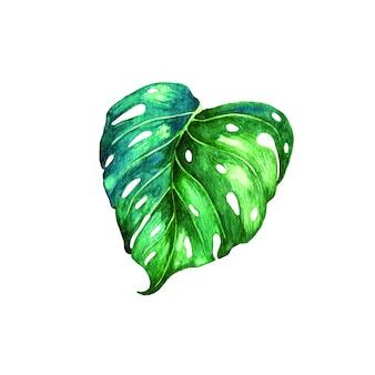 Modèle sans couture avec des feuilles de palmiers exotiques tropicaux verts.