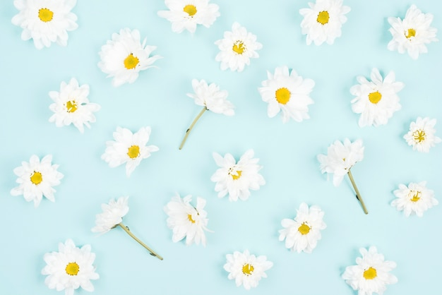 Modèle sans couture de fleur blanche sur fond bleu