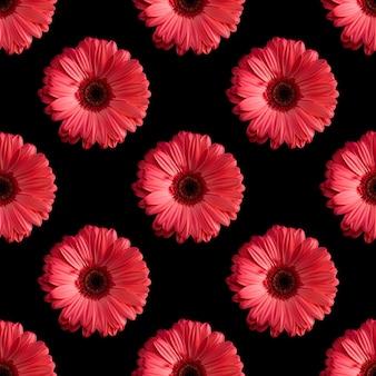 Modèle sans couture de fleurs de gerbera isolé sur fond noir