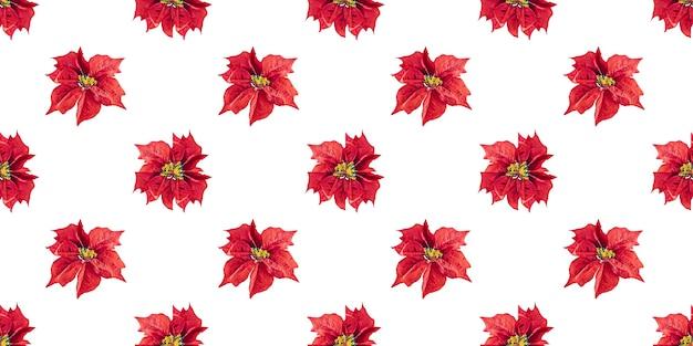 Modèle sans couture de noël fleur de poinsettia isolé sur fond blanc
