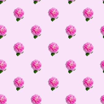 Modèle sans couture avec des roses de thé sur fond rose. texture isométrique minimale des aliments.