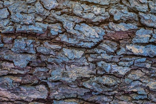 Modèle texturé de tronc d'arbre en bois ancien