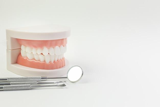 Le modèle tooth sur fond blanc pour le contenu dentaire.