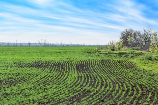Les modèles sur le domaine de l'agriculture / paysage rural jeunes pois
