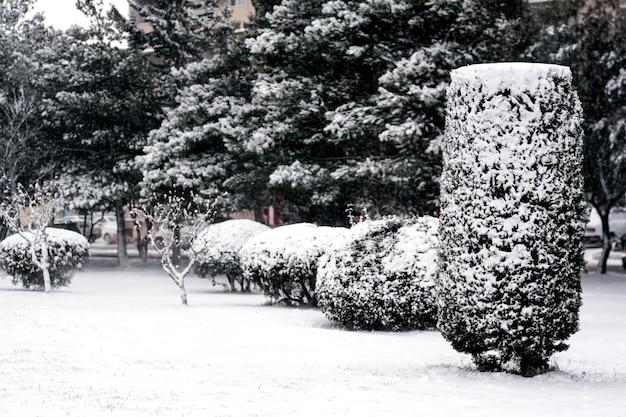 Modèles d'hiver sur les arbres, arbres couverts de neige