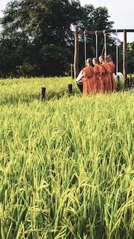 Moine avec rizière en thaïlande