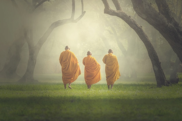 Moines randonnée dans la forêt profonde, concept de religion de bouddha