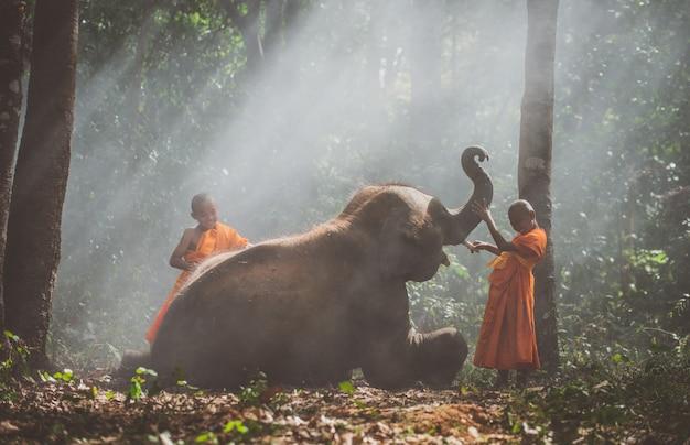 Moines thaïlandais marchant dans la jungle avec des bébés éléphants