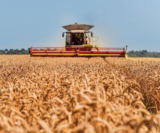 Moissonneuse-batteuse en action sur un champ de blé