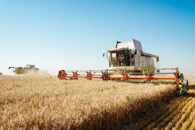 La moissonneuse-batteuse récolte le concept de blé mûr d'une riche image agricole de récolte