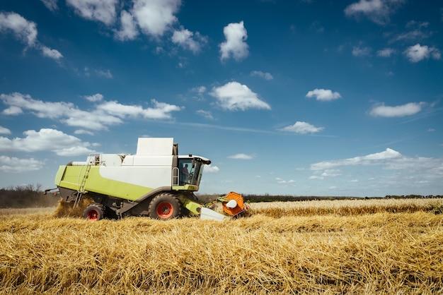 La moissonneuse-batteuse récolte du blé mûr. concept d'une riche récolte. image de l'agriculture