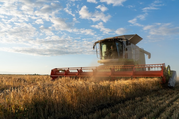 La moissonneuse-batteuse récolte du blé mûr. image de l'agriculture