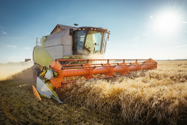 La moissonneuse-batteuse récolte du blé mûr.