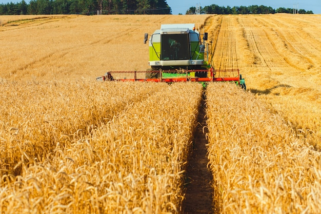Moissonneuse-batteuse travaillant sur un champ de blé