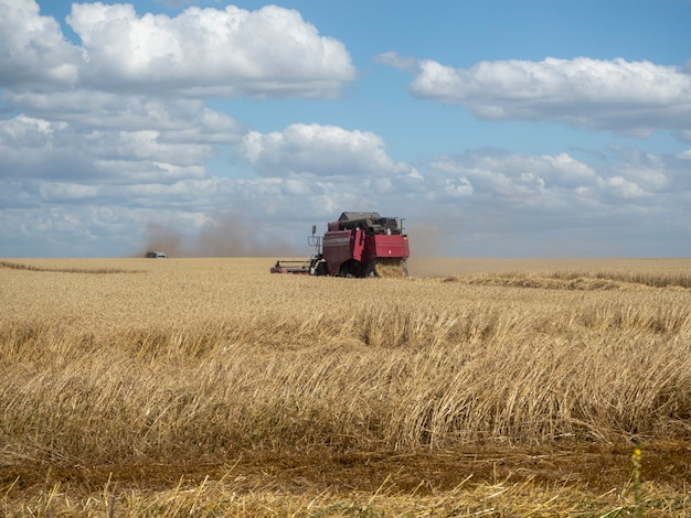 Moissonneuse rouge dans les récoltes d'été. moissonneuse-batteuse machine agricole pour la collecte de blé mûr doré sur le terrain.