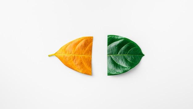 La moitié d'une feuille sèche verte et brune sur blanc