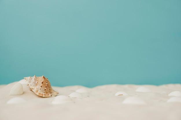 Mollusque dans le sable
