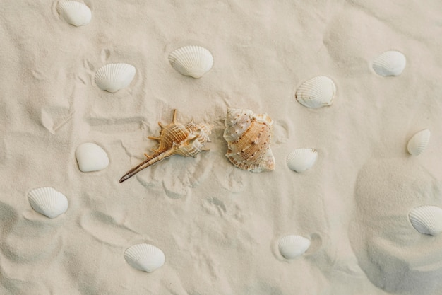 Mollusques et coquillages