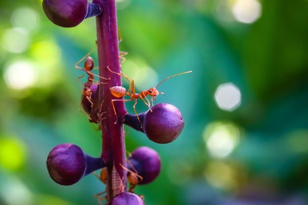 Monde macro de fourmi rouge sur la jolie petite tige d'arbre