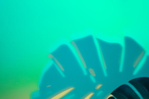 Monstera laisse ombre sur fond turquoise