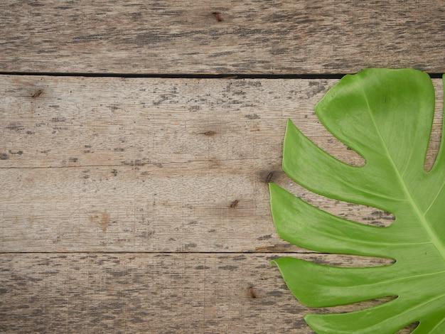 Monstera plante feuilles, vignes tropicales à feuilles persistantes isolés sur le vieux fond en bois, vue de dessus