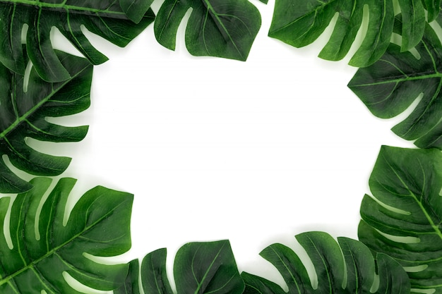Monstera tropical palm leaves