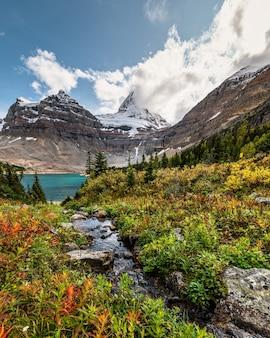 Mont assiniboine avec ruisseau qui coule dans la forêt d'automne sur le lac magog au parc national