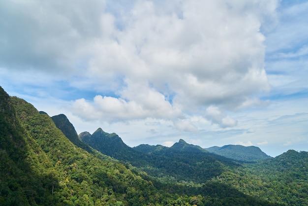Montagne avec des arbres