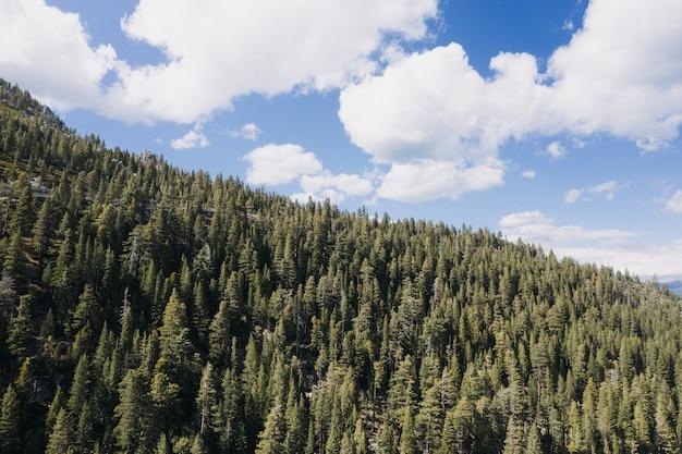Montagne couverte de forêt et d'un ciel bleu