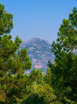 Montagne encadrée de branches de conifères. mise au point sélective.