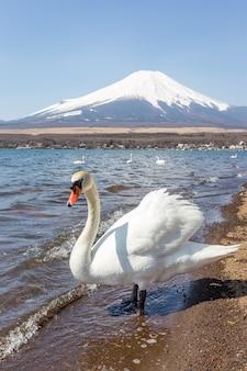 Montagne fuji du lac yamanakako par temps clair
