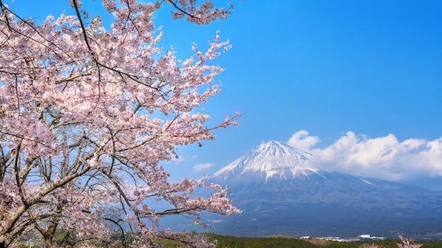 Montagne fuji et fleur de cerisier au printemps, fujinomiya au japon.