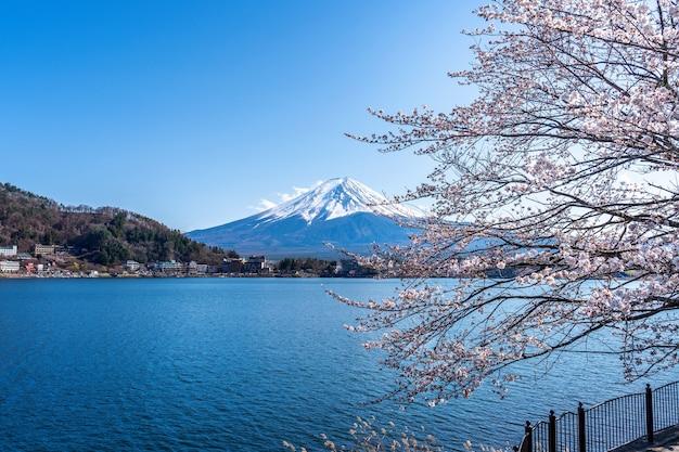 Montagne fuji et fleurs de cerisier au printemps, japon.