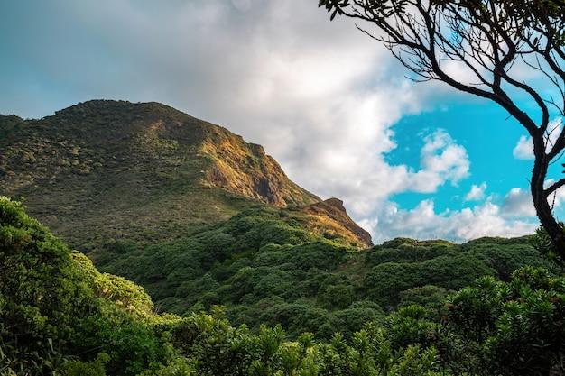 La montagne hikurangi takatu head à piha
