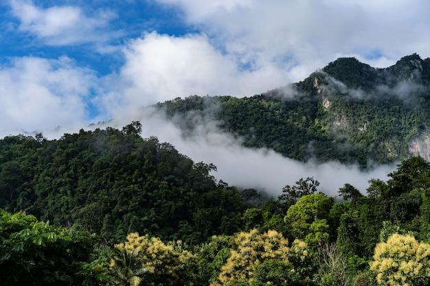Montagne route paysage terrain vert terre nature vue en été