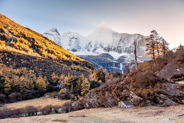 Montagne sacrée de yangmaiyong avec forêt de pins en automne sur le plateau de yading