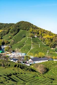 Montagne de thé longjing du lac de l'ouest de hangzhou