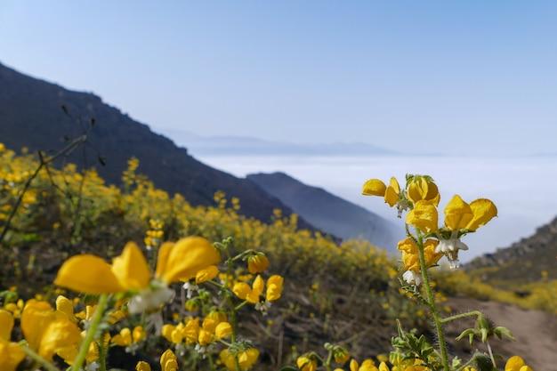 Montagne vallée fleur paysage fleurs jaunes