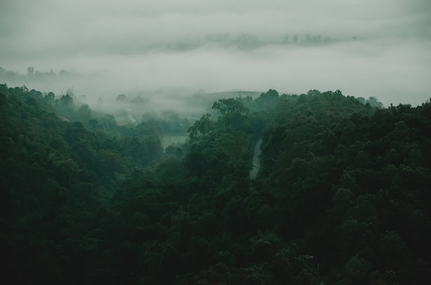 Montagne verte avec arbre dans l'obscurité