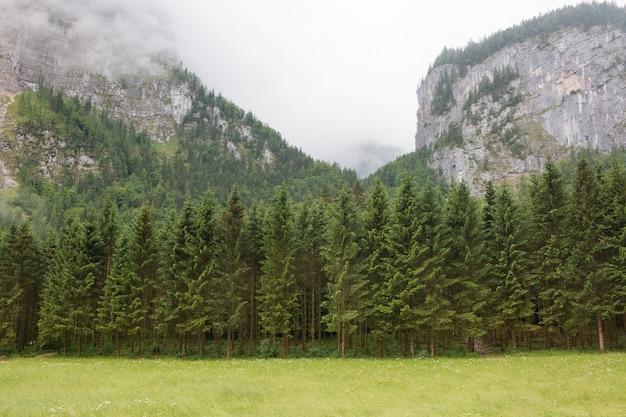 Montagnes alpines et mur de forêt d'un vert profond. promenade en journée d'été dans la ville de hallstatt, autriche